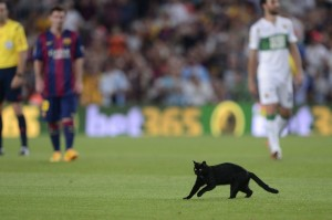 VIDEO - un gatto interrompe la partita del Barcellona e fa invasione di campo!
