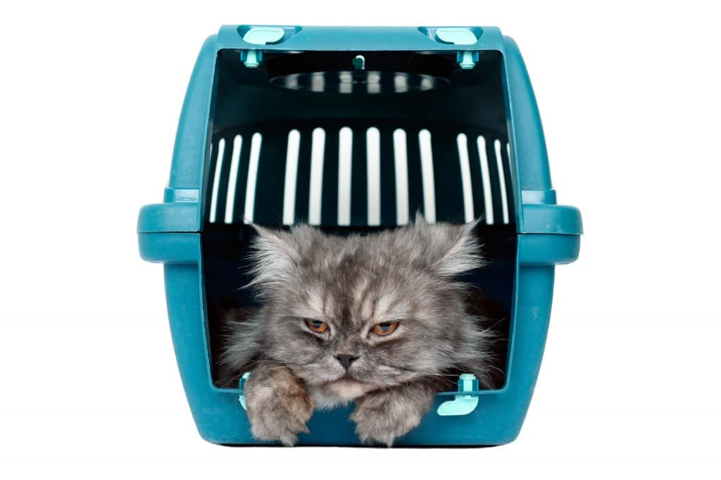 Cat-in-travel-basket-1024x682