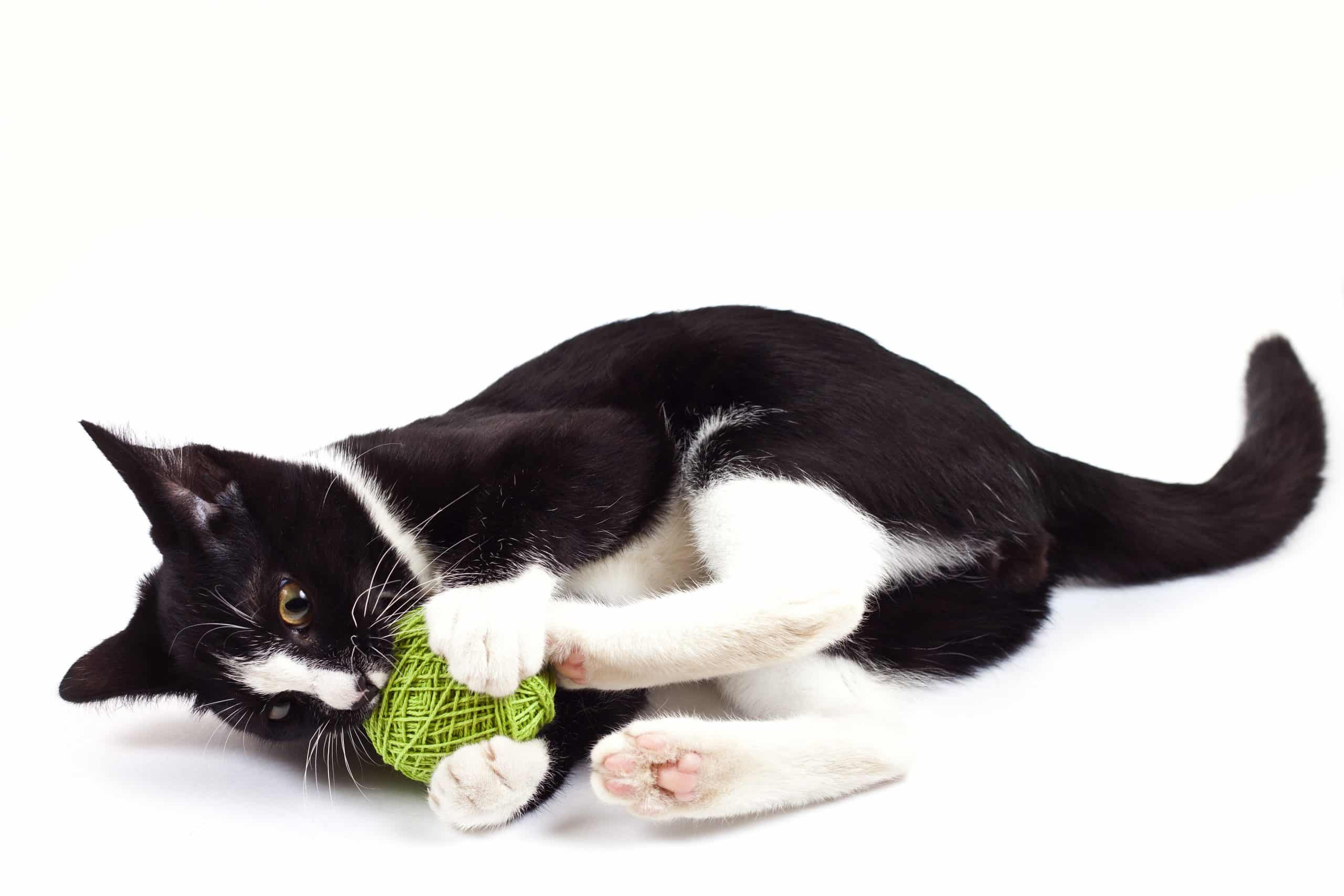 cat playing with a ball on a white background