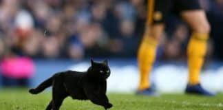 gatto interrompe partita di calcio