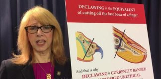 declawing illegale a New York