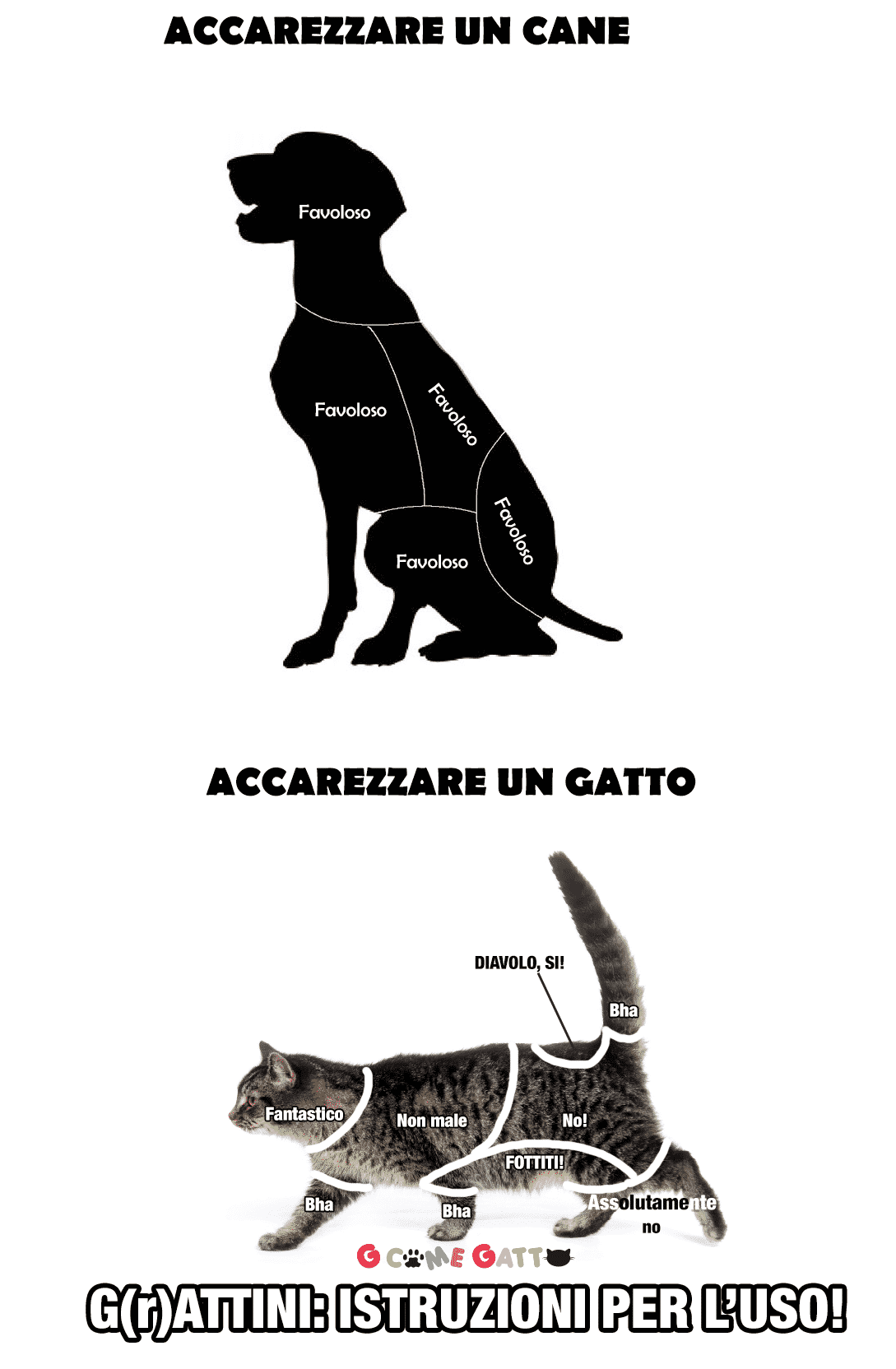 differenza cane e gatto