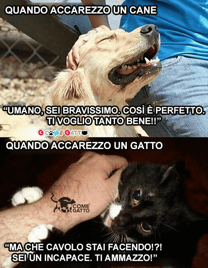 differenza tra cane e gatto