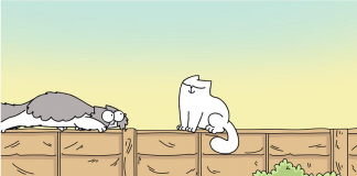 simon's cat comportamento gatti